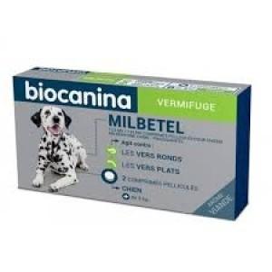Milbetel chien