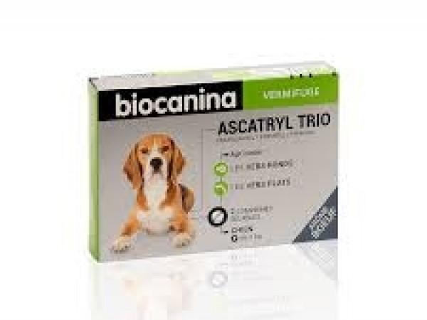 Ascatryl trio chien